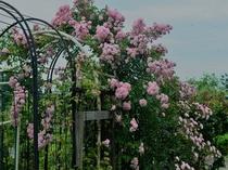 モンターニャ薔薇ガーデン