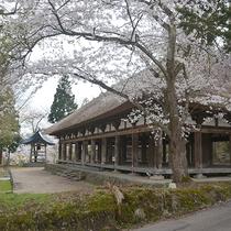 *[周辺観光]桜が咲き始めた春の長床熊野神社
