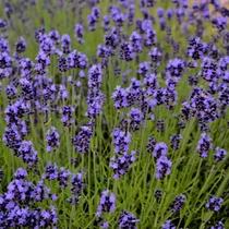*[お庭]暖かい季節はお庭で色とりどりのお花を楽しめます