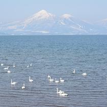 *[周辺観光]冬には白鳥が訪れる猪苗代湖