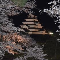 *[周辺観光]夜桜のライトアップは必見♪春の鶴ヶ城