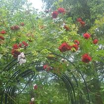 *[お庭]モンターニャのバラガーデンで素敵な時間をお過ごしください