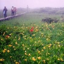 *[周辺観光]ニッコウキスゲの名所、雄国沼湿原をトレッキング