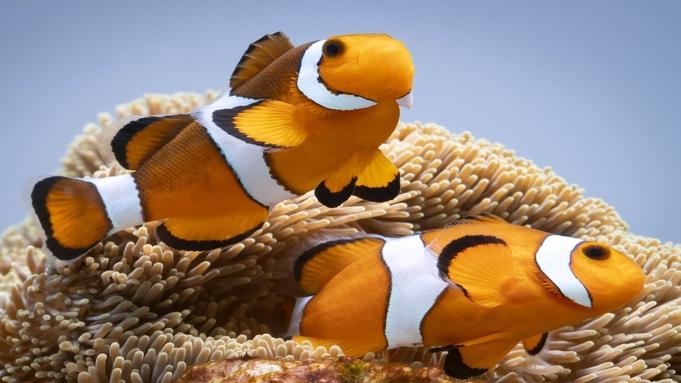 世界最大級の水族館【海遊館】トワイライト入場引換付プラン《朝食付》