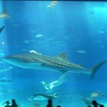 美ら海水族館Ⅱ
