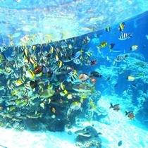 美ら海熱帯魚