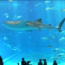 美ら海水族館Ⅰ