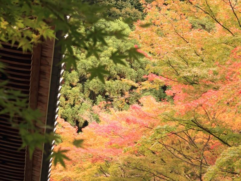 【秋】古都・京都 紅葉の秋