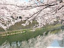 修学旅行気分を思い出す♪古都・京都へおこしやす!