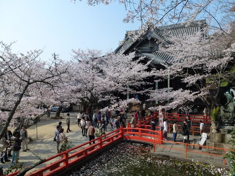 紀三井寺:桜の名所「紀三井寺」(JRで約20分)