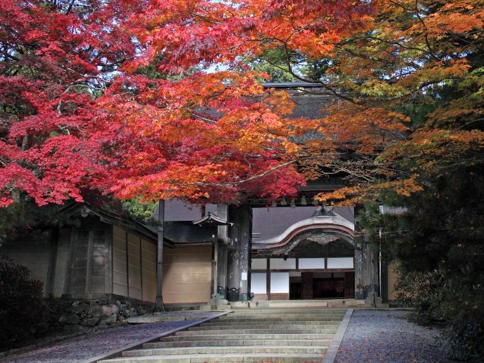 金剛峰寺:杉木立の緑に映える紅葉に彩られた金剛峰寺(お車で約90分)