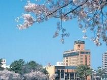 春は桜に囲まれます。