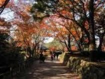 岡崎公園 紅葉の散策風景