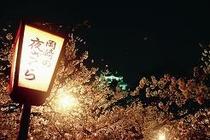 4月恒例の桜祭り 夜桜もきれいです