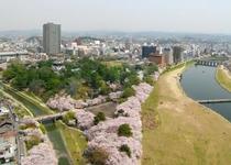 桜につつまれます。