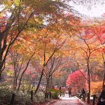 ●瑞宝寺公園 紅葉の名所。秀吉が終日眺めていても飽きないことから「日暮らしの庭」とも(徒歩20分)