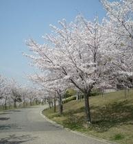 すぐ近くの「西神中央公園」桜並木