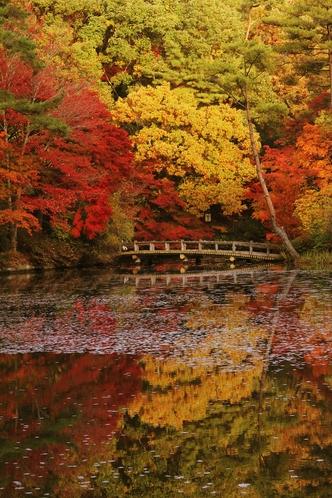 神戸市立森林植物園   車で33分