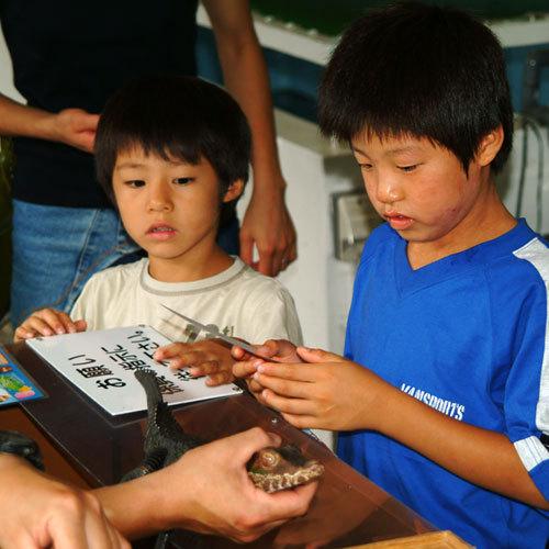 *【熱川バナナワニ園】ワニにタッチング!人口ふ化した子ワニに触れるコーナーも。