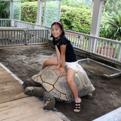 *【熱川バナナワニ園】インドからきた長寿ゾウガメに直接触れて遊ぶことも!