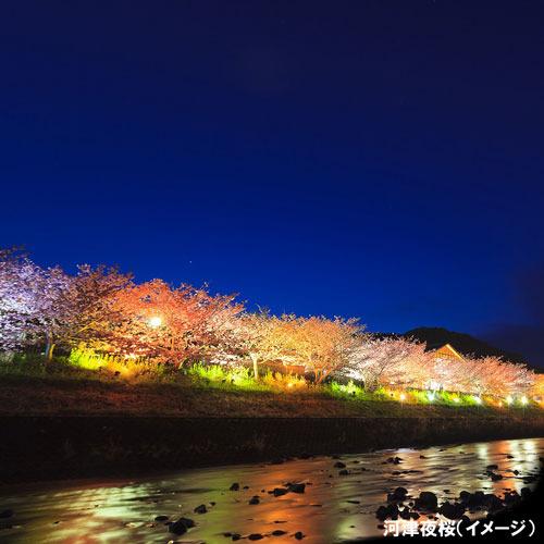 【河津夜桜(イメージ)】河に映る桜は幻想的です