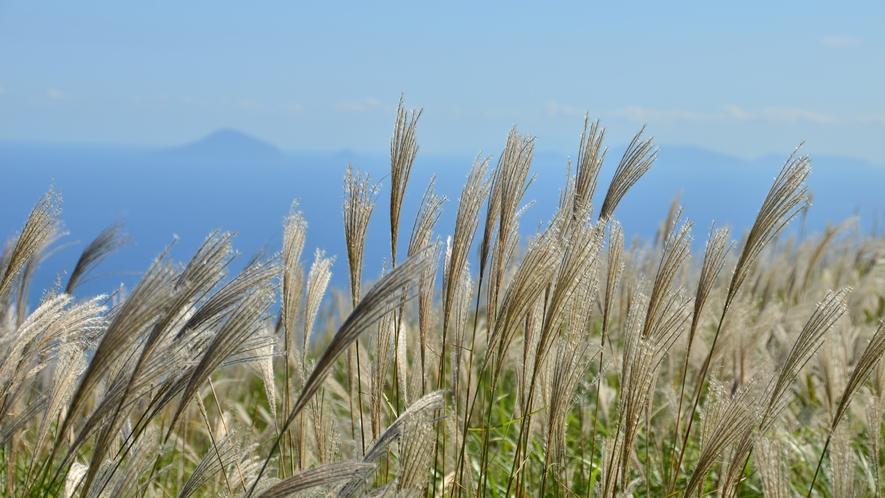 【細野高原のすすき】すすきの高原の知られざる絶景を見に行きませんか