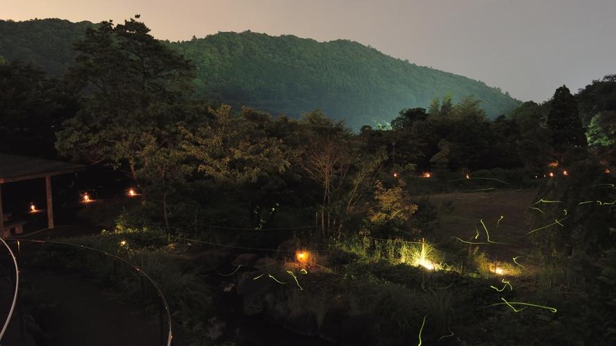 初夏の東伊豆の風物詩「ほたる観賞」-奈良本けやき公園
