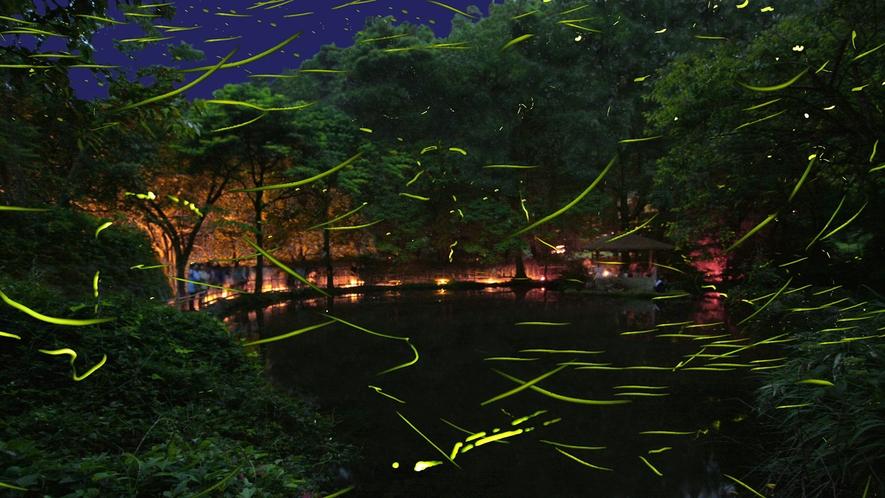 初夏の東伊豆の風物詩「ほたる観賞」-大川温泉竹ヶ沢公園