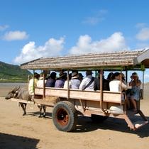 ★由布島の水牛車★