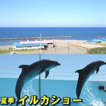 日本海「なおえつ海水浴」、上越水族館「イルカショー」