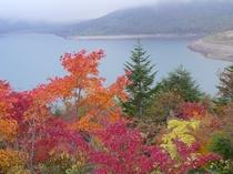 野反湖の紅葉