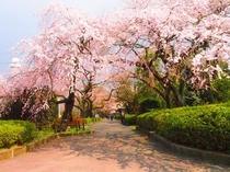 ホテル近く♪ 榴ヶ岡公園の花見会場です♪