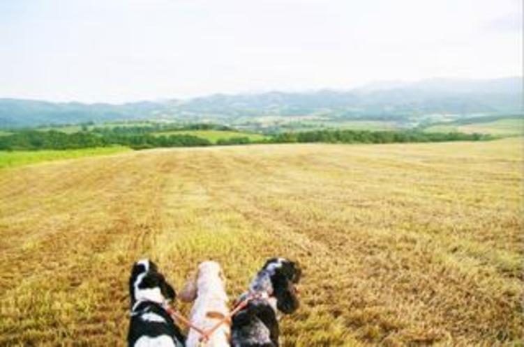 農場を散歩