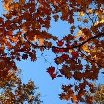 *紅葉風景/紅葉の景色をカメラに