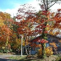 *紅葉風景/心も彩る紅葉の景色
