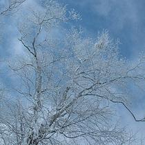 *冬景色/美しい白銀の世界へ