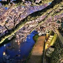 玉造温泉街桜並木