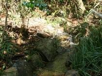 上山田の井手