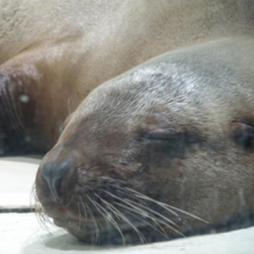 大分マリーンパレス水族館「うみたまご」は、車で11分