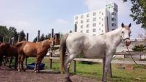 【牧場の馬】ホテルに併設の牧場