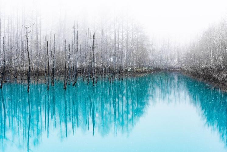 美瑛町青い池♪