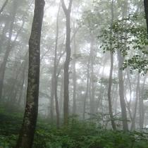 大山ブナ林