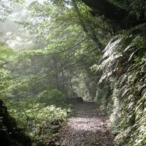 【加江田渓谷】ホテルより車で20分、マイナスイオンを浴びて宮崎の自然と触れ合えるトレッキングコース