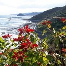 【日南海岸・絶景ロード】日向灘を一望できる絶景ロード、季節の花木がお出迎え♪