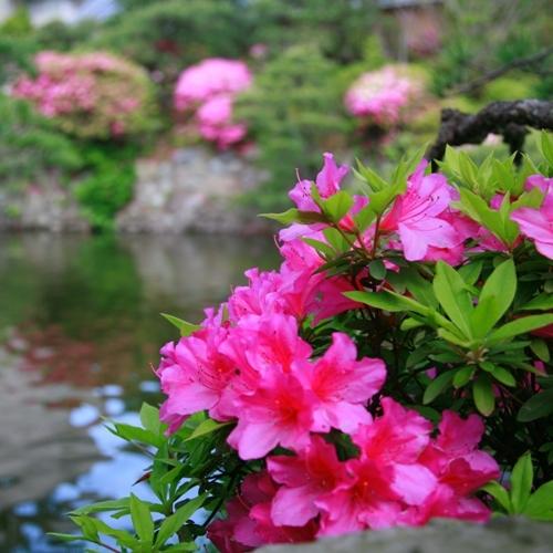春の庭園A