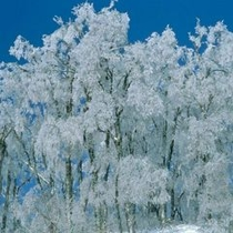 大山の樹氷