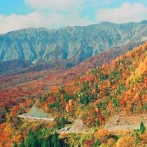 大山の美しい紅葉