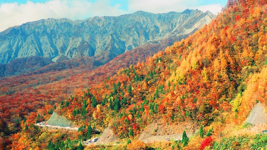 紅葉のシーズンがやってきました。