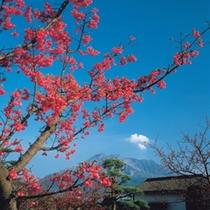 鹿児島の紅葉