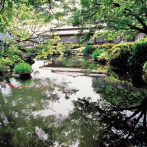 鹿児島の池には鯉も泳いでいます。